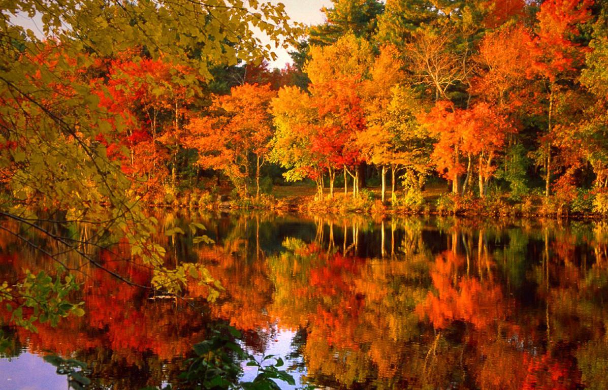 I parchi dove ammirare il foliage d'autunno