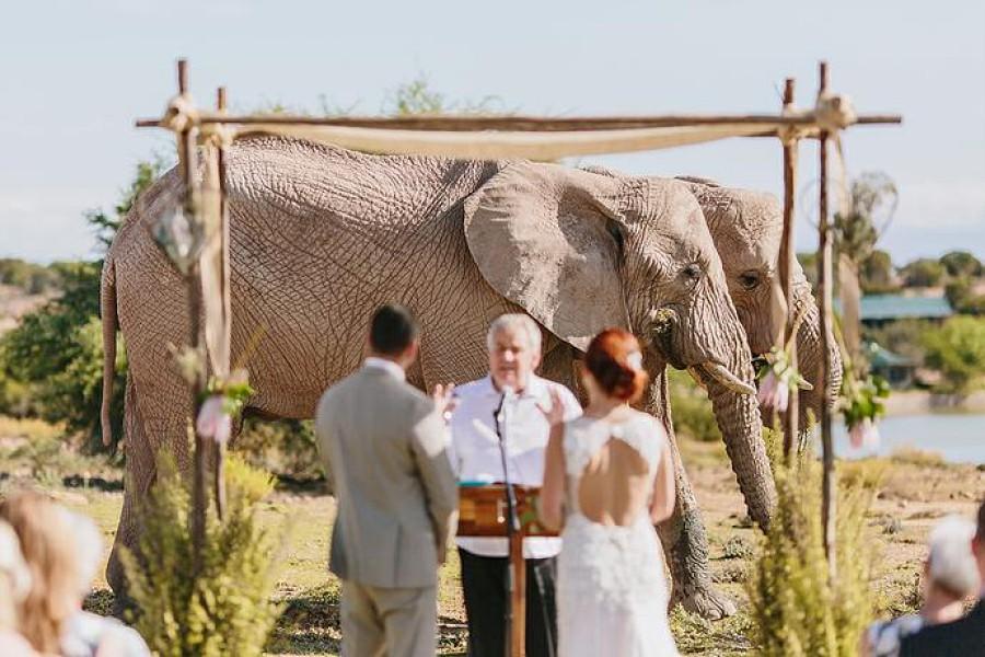 Sposarsi durante un safari in Kenya